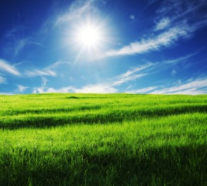 blue_sky_grass_from_the_grass_highdefinition_picture